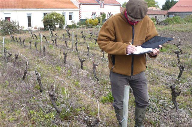 expertise vigne