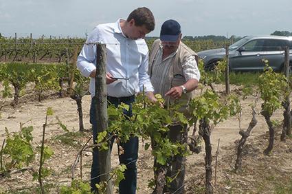 Expertise gel sur vignes